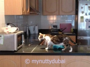 Investigating the microwave