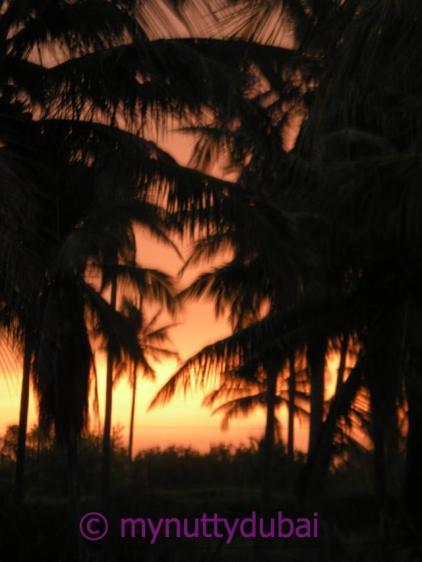 Mozambique, 2008
