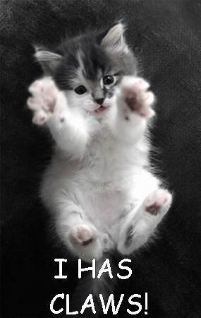 cat - i has claws