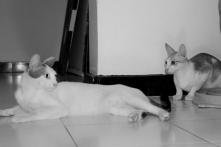Emmett & Seven