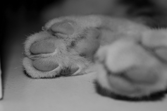 Close up on Joey's paws