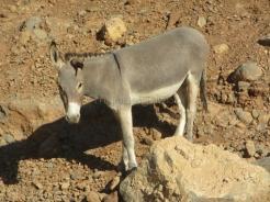 Obligatory donkey