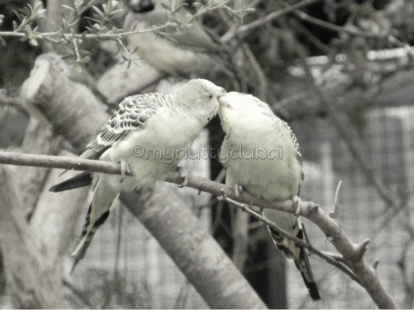 2 birds in love