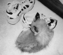 Cuddling up to my sneakers
