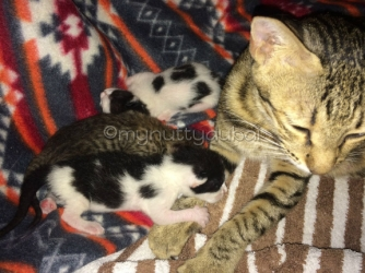 Mom with her 3 kittens