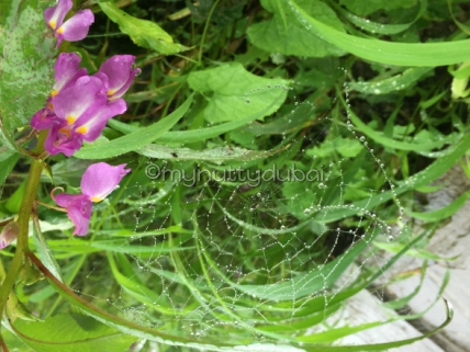 Having fun with spiderwebs in the rain