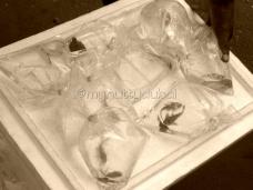 Fish in plastic bags