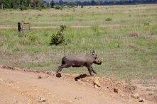 wheeeee - warthog