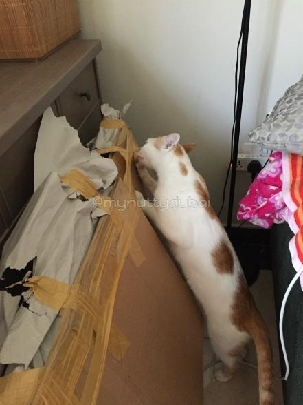 Olly helping me unpack