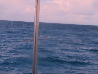 Dolphins spotted